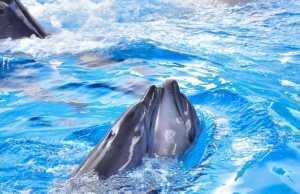 дельфинарии